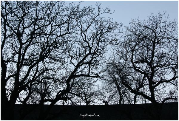 trees, winter, walkers