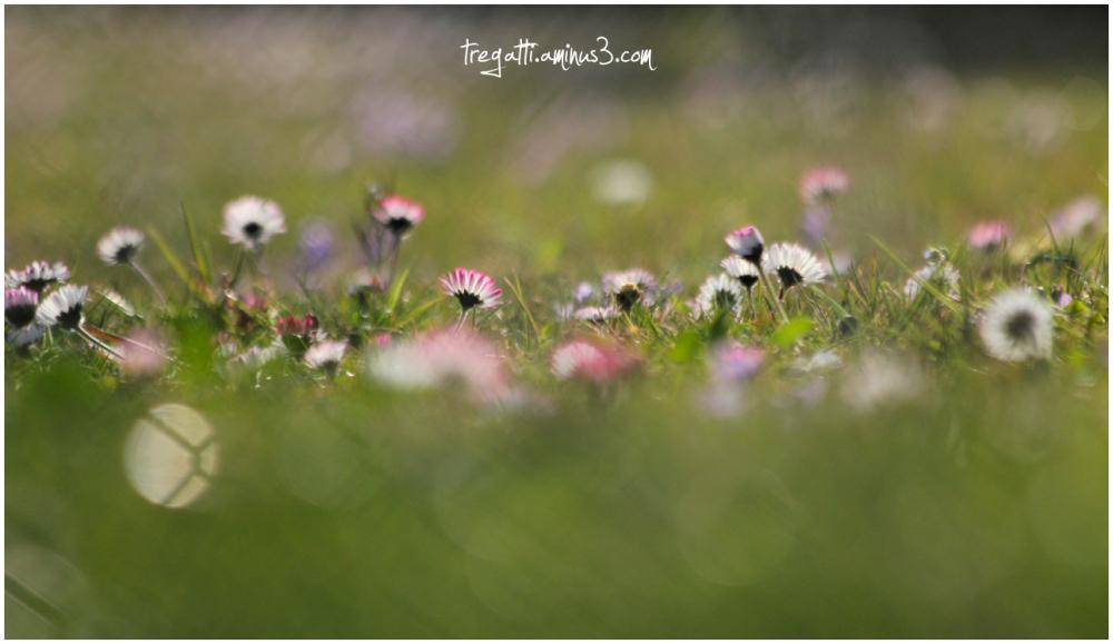 springtime, wildflowers