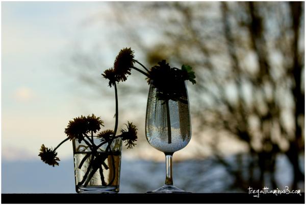 spring, flowers, dandelions