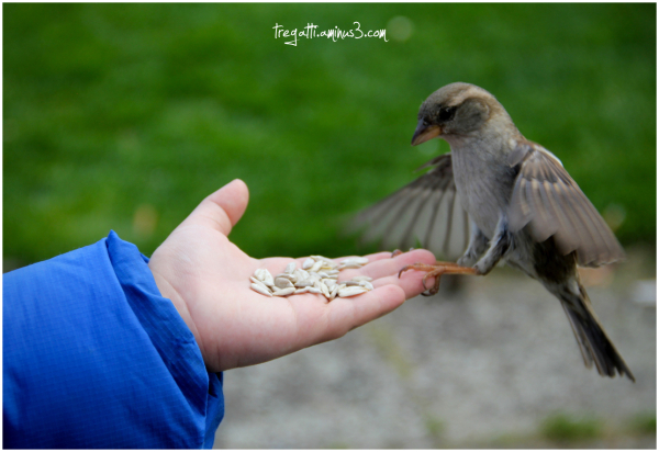 sparrow, bird, hand, sunflower, seeds