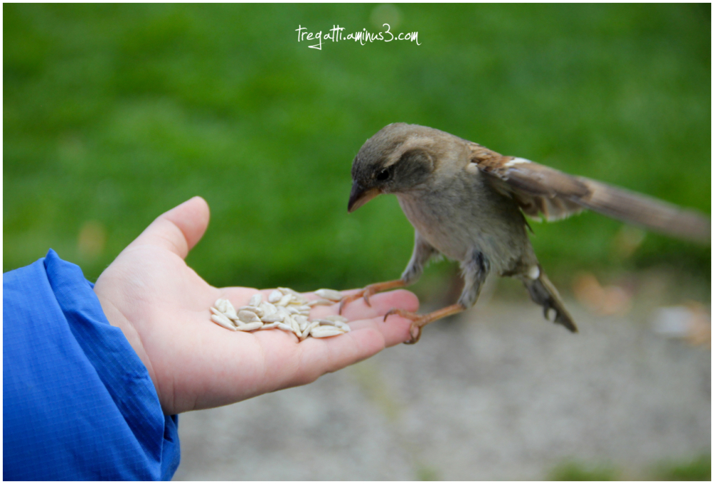sparrow, hand, sunflower, seeds