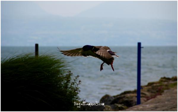duck, wind