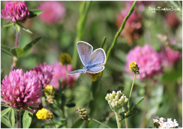 butterfly, wildflowers