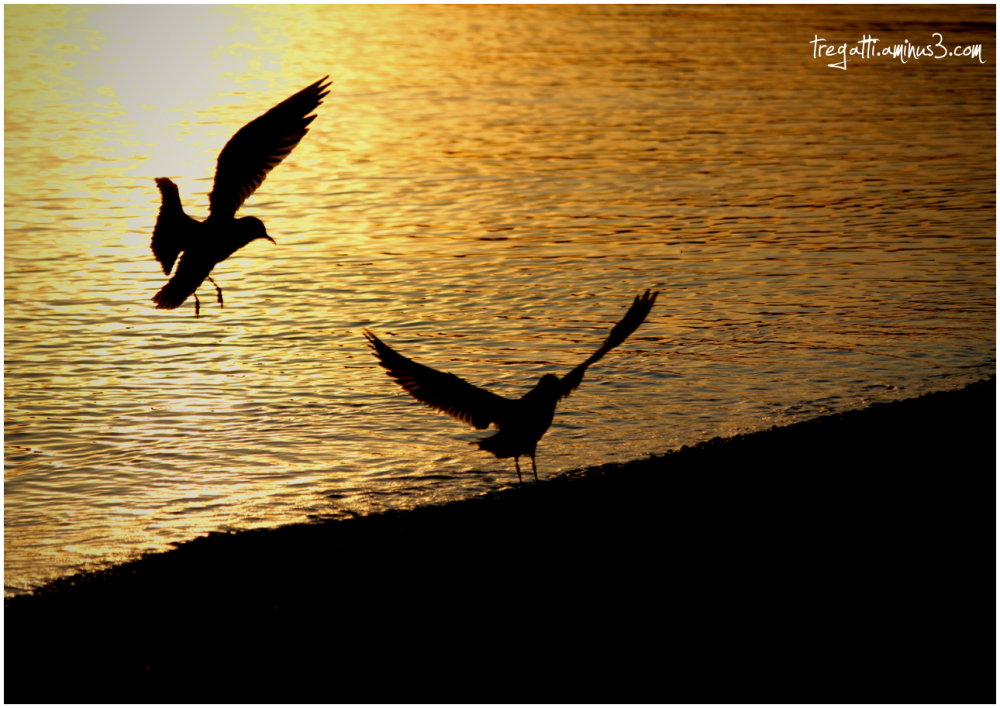gulls, light, shadow, lake