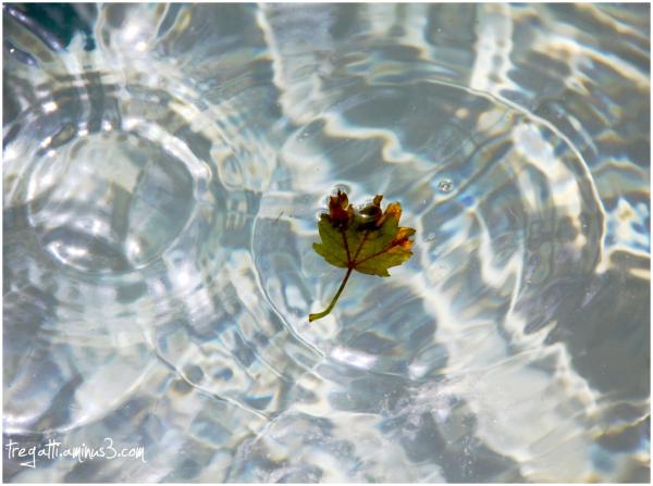 leaf, water