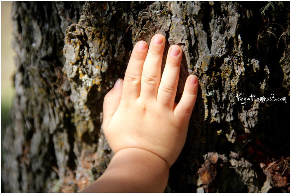 hand, tree