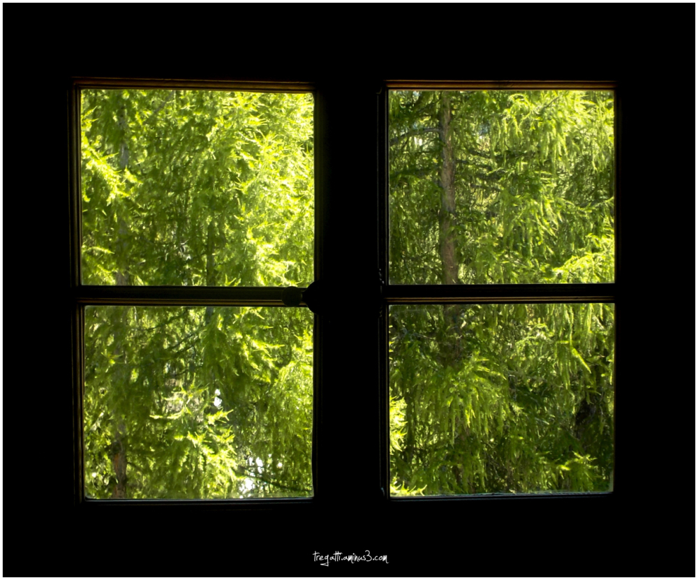 trees, forest, woods, window