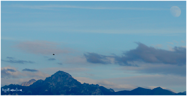 mountain, bird, moon