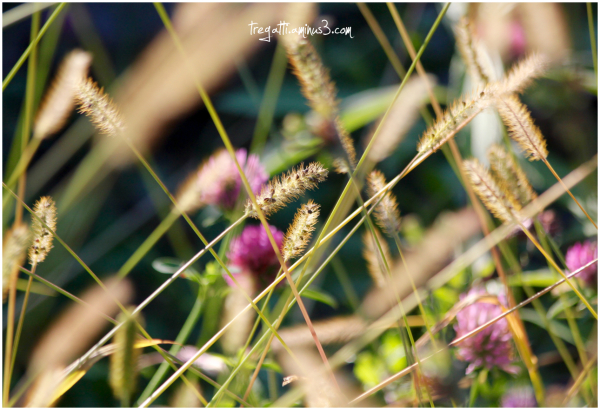 wildflowers, autumn