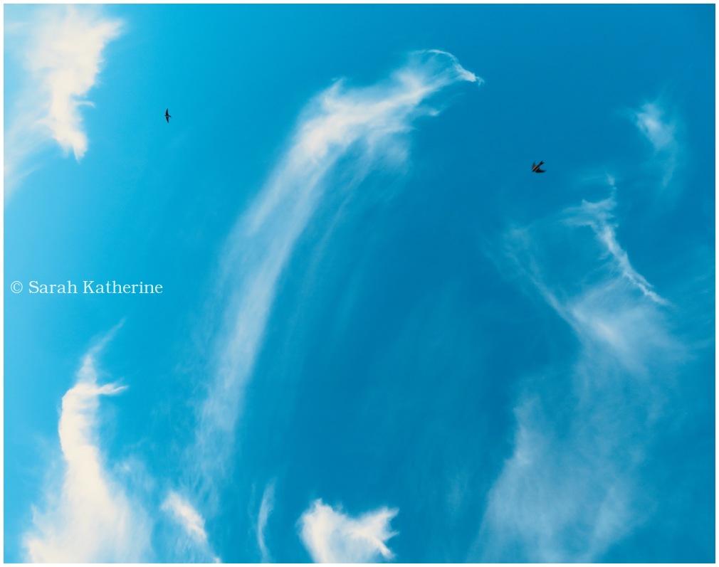 nuages, clouds, hirondelles, swallows