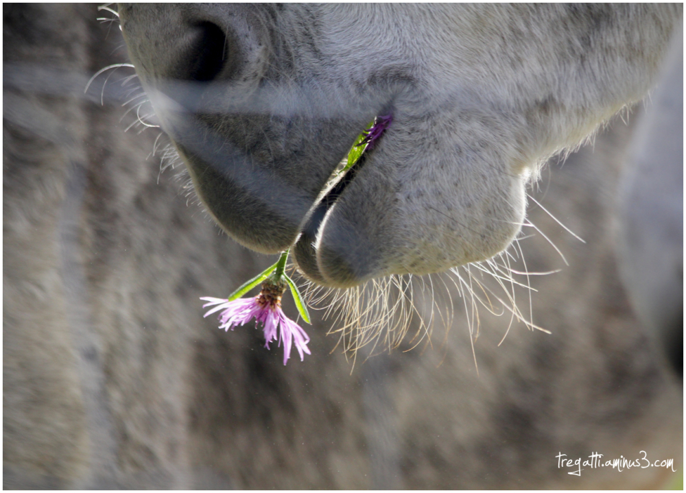 donkey, wildflowers, whiskers