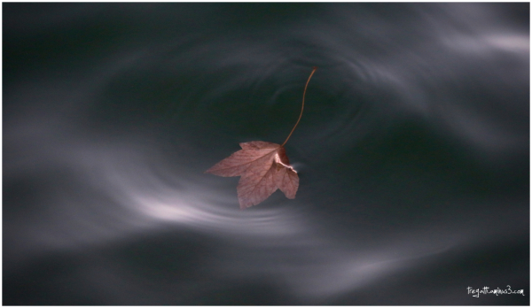 autumn, leaf, water light