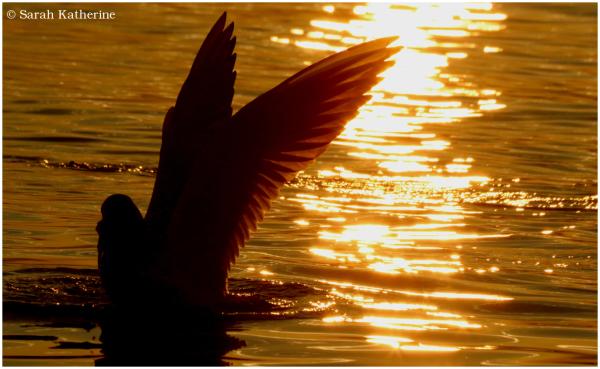 gull wing sunset lake