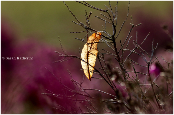 winter, leaf, heather