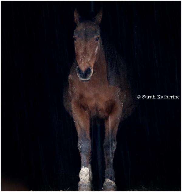 horse, rain