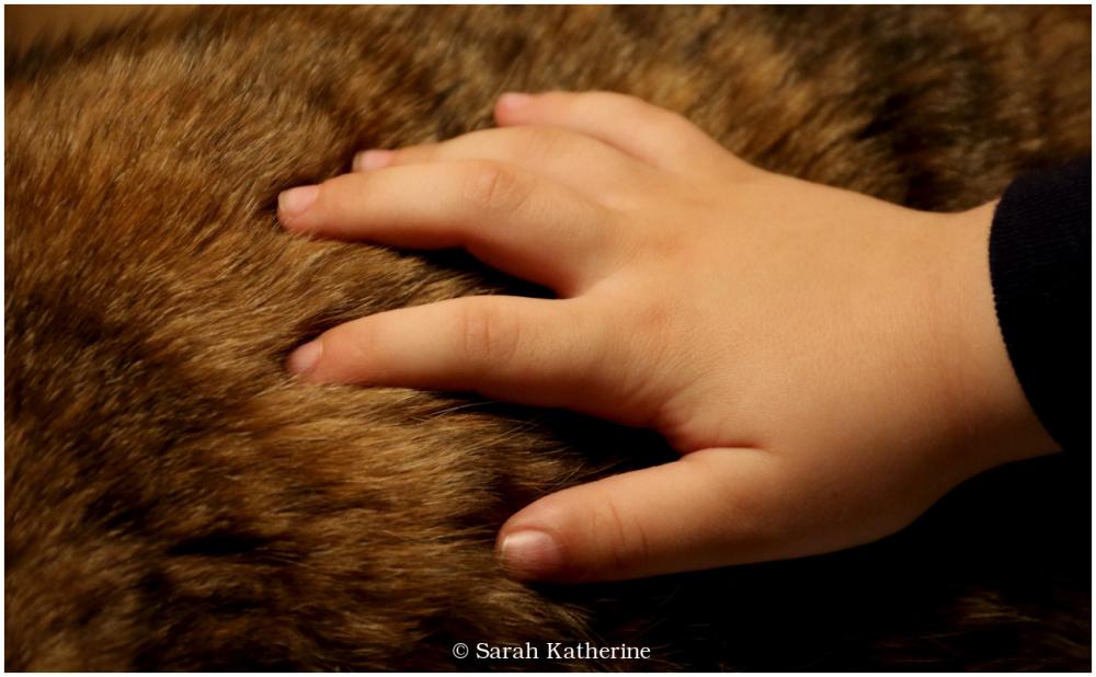 cat, hand