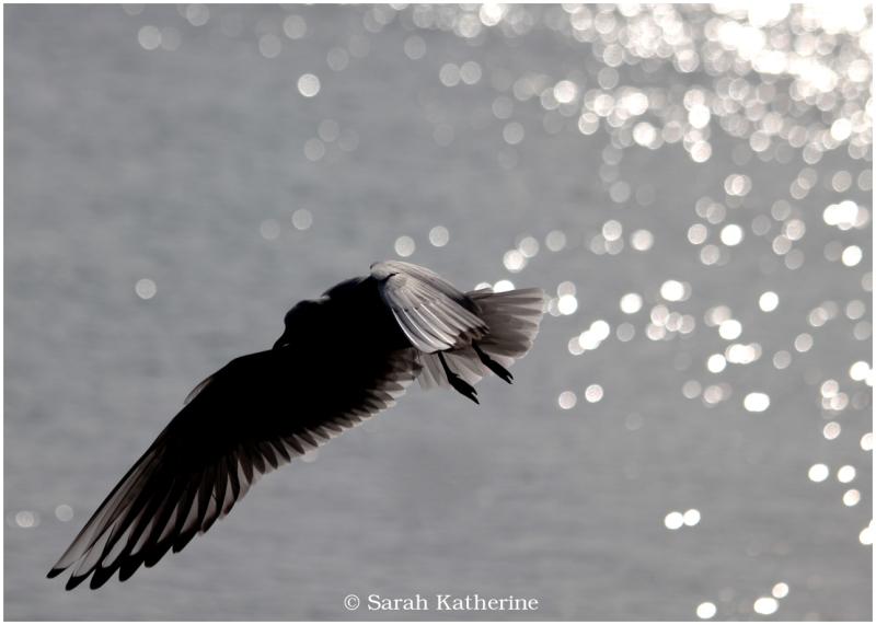 gull, lake, sunlight