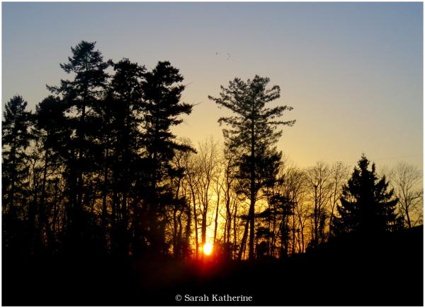 sunset, trees, birds