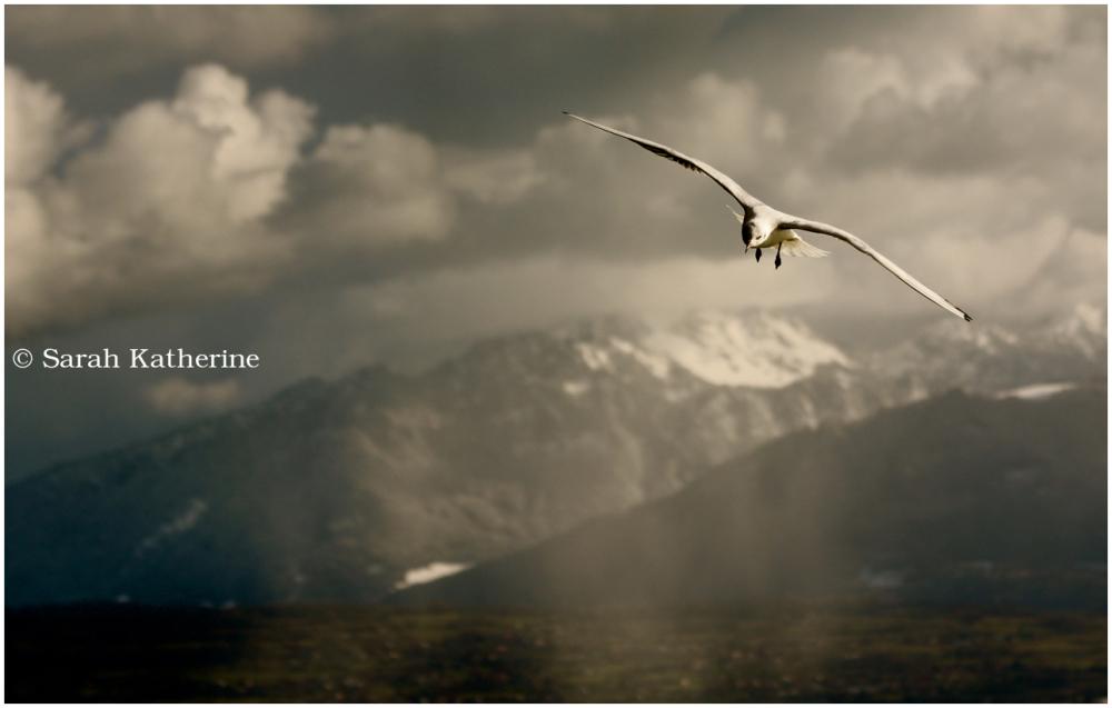 gull, light, mountains