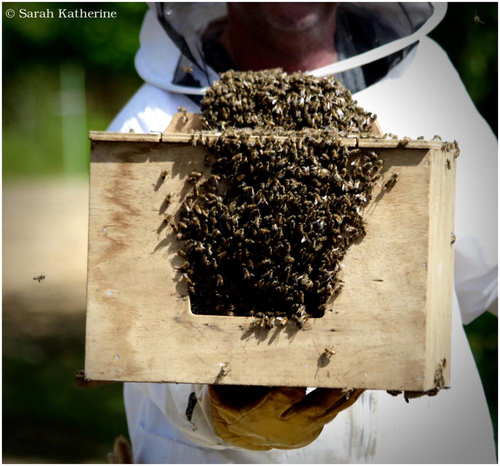 bees, bee keeper