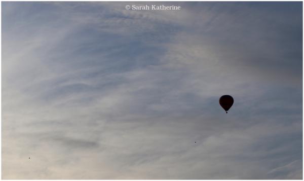 birds, hot air balloon