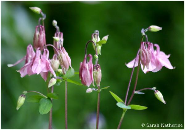 Blushing Pink Wildflowers