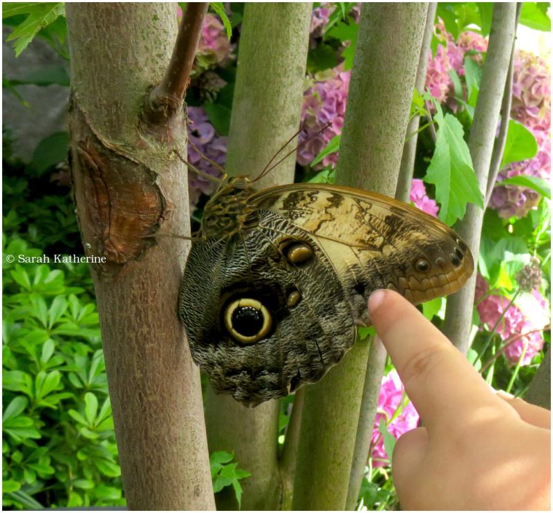 butterfly, finger