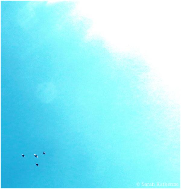 birds, sun