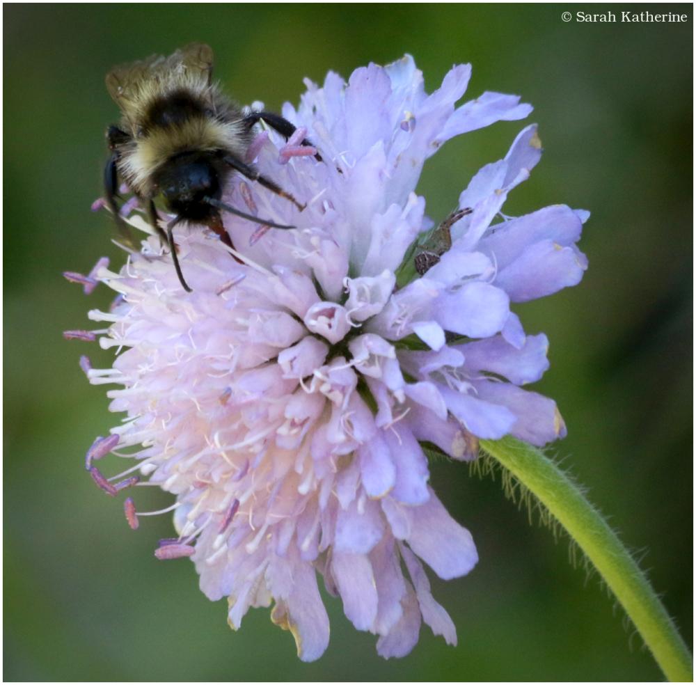 spider, bee, flower