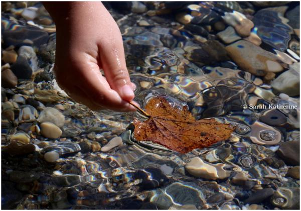 leaf, lake, hand
