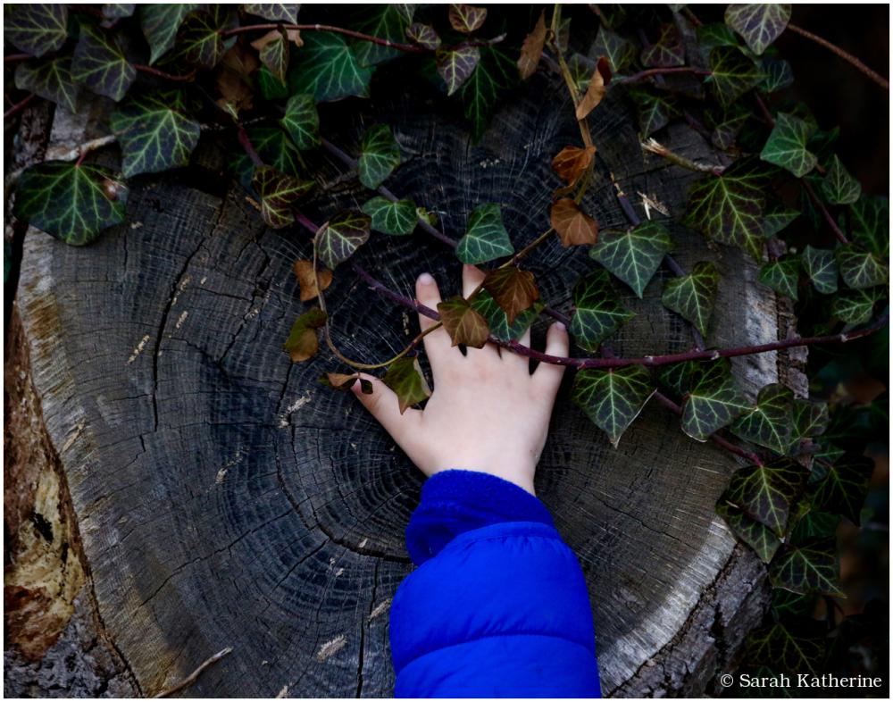 hand, tree, stump, trunk, growth
