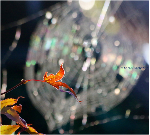 leaf, sunlight, spider web, autumn