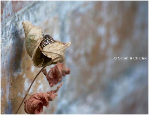 spider, autumn