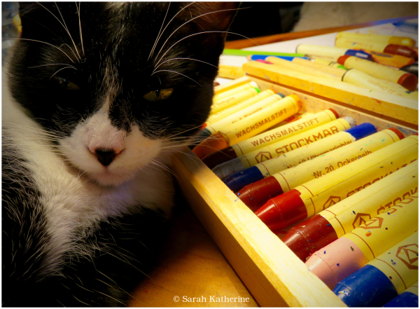 cat, crayons