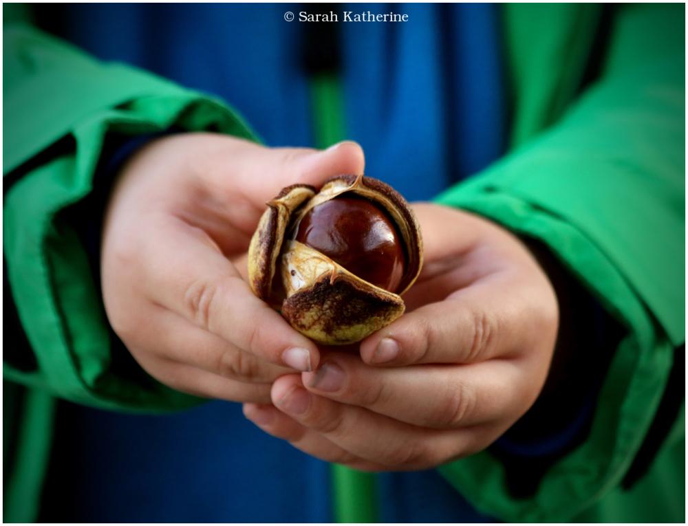 hand, chestnut