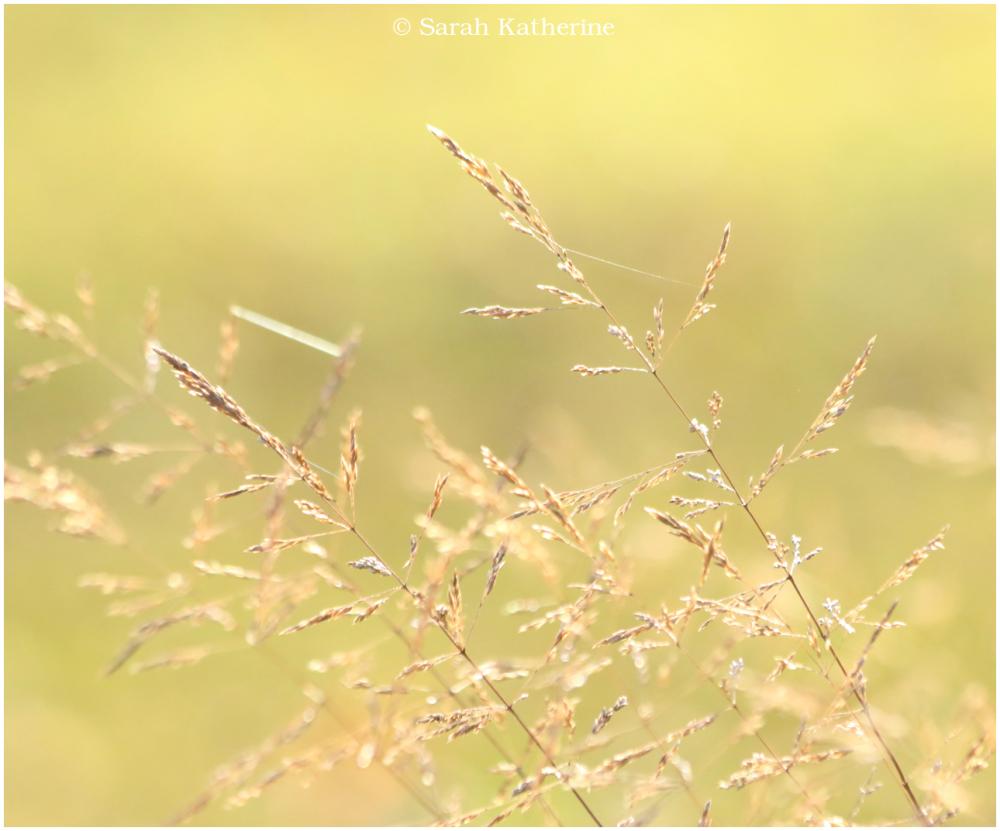 wild garden, autumn