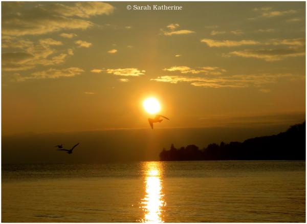 gulls, sunset, lake