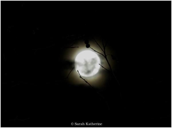 moon, tree buds, autumn