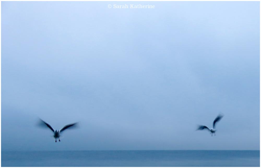 gulls, lake