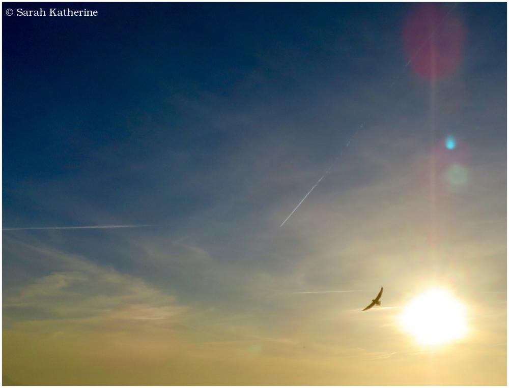 gull, sunlight