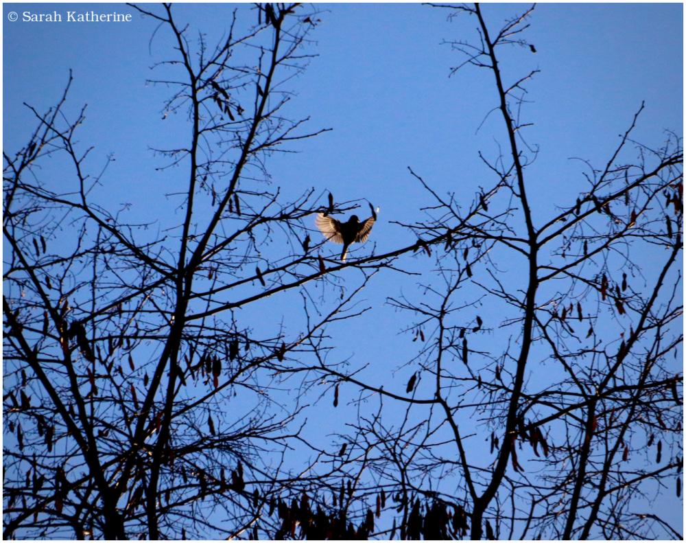 winter, trees, bird, wings