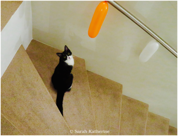 cat, balloons, stairs