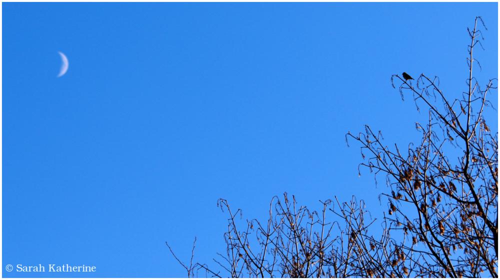 sparrow, moon, winter