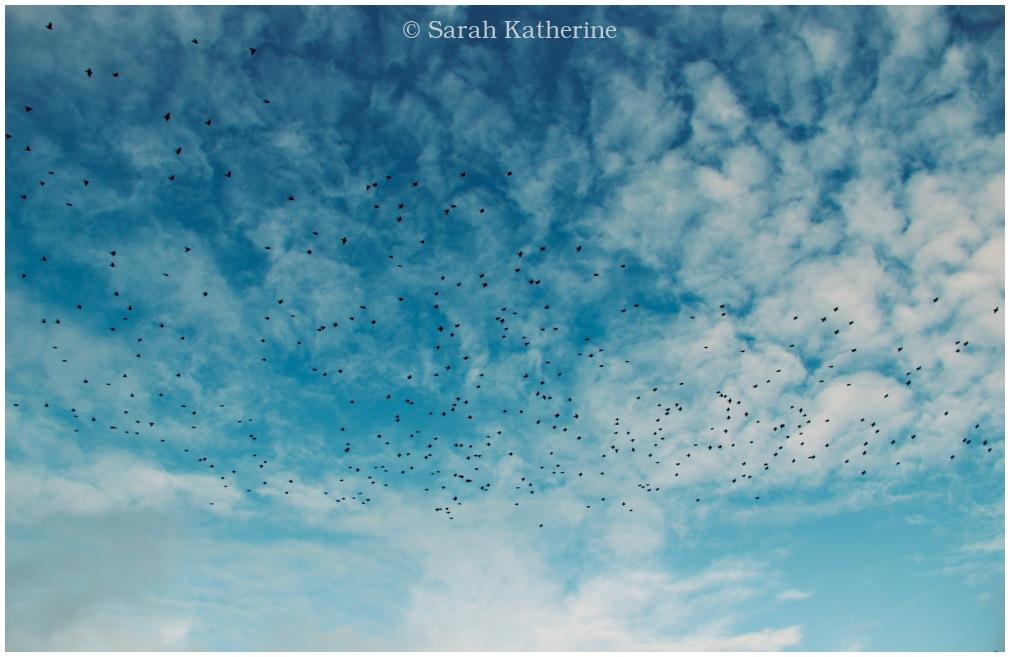 starlings, autumn, sky