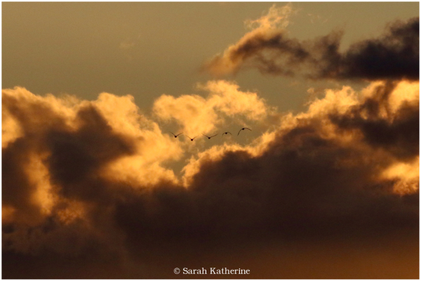 gulls, clouds, winter