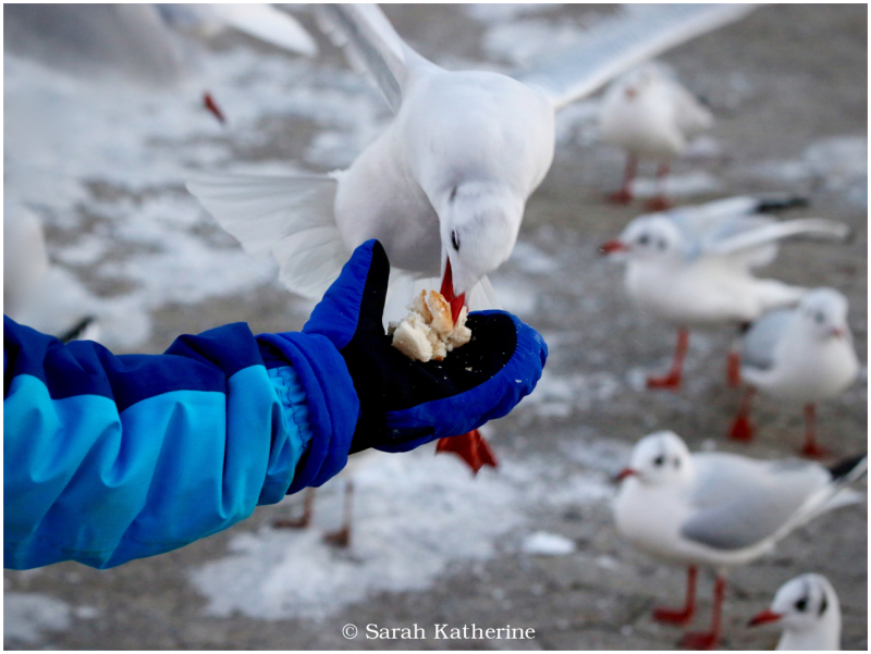 gull, hand, glove, winter