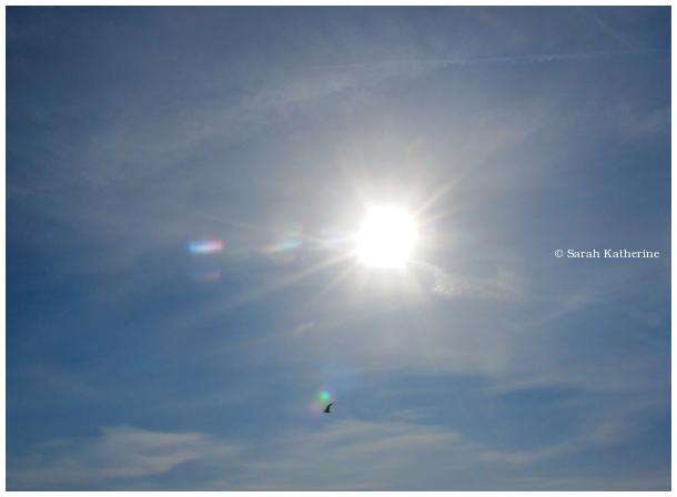 gull, sunlight, wings