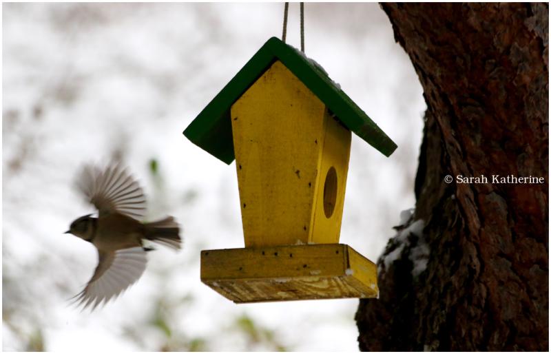 greattit, bird, feeder, winter