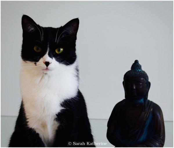 cat, Buddha