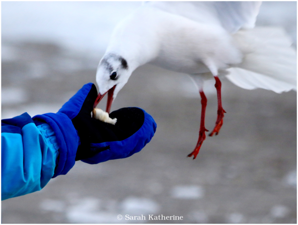 hand, gull, winter